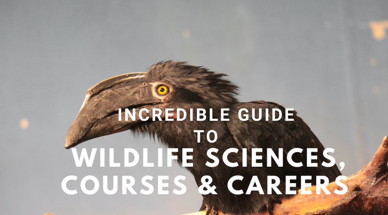 Incredible guide to wildlife science, courses and careers