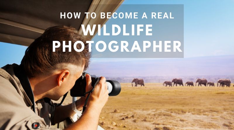 Wildlife Photography - Be a real wildlife photographer